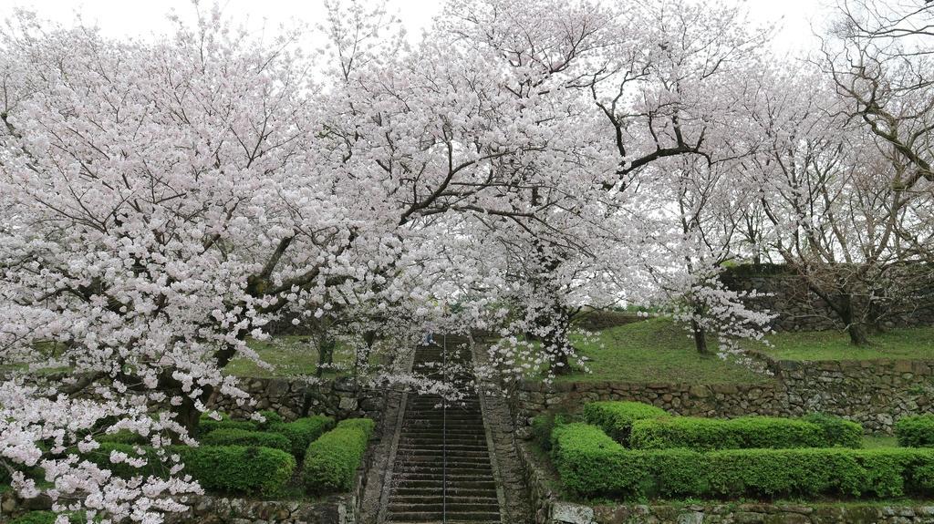 旧円融寺庭園 (国指定名勝)-1
