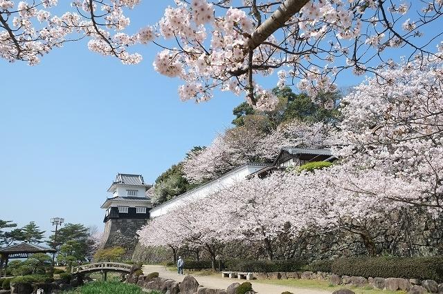 【中止】大村桜まつり-4