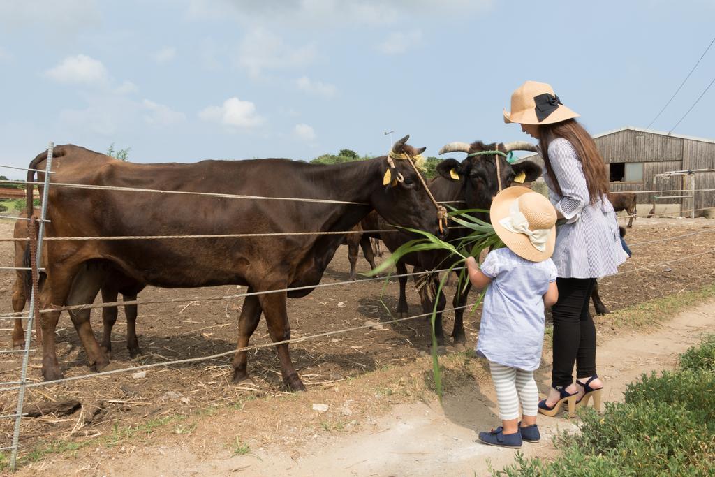 和牛飼育体験-1