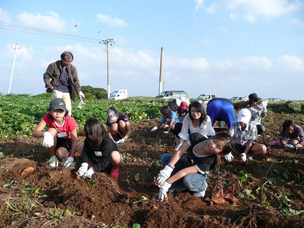 サツマイモの収穫体験-1